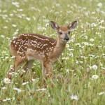 dreams_bambi