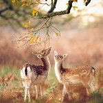 dreams_fields_bambi2