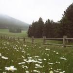 dreams_fields_fence1