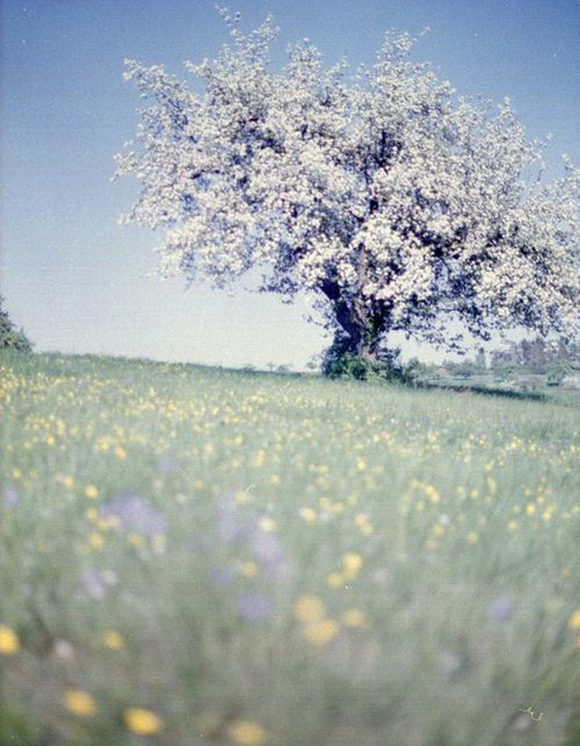 dreams_fields_tree1