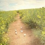 dreams_fields_yellow
