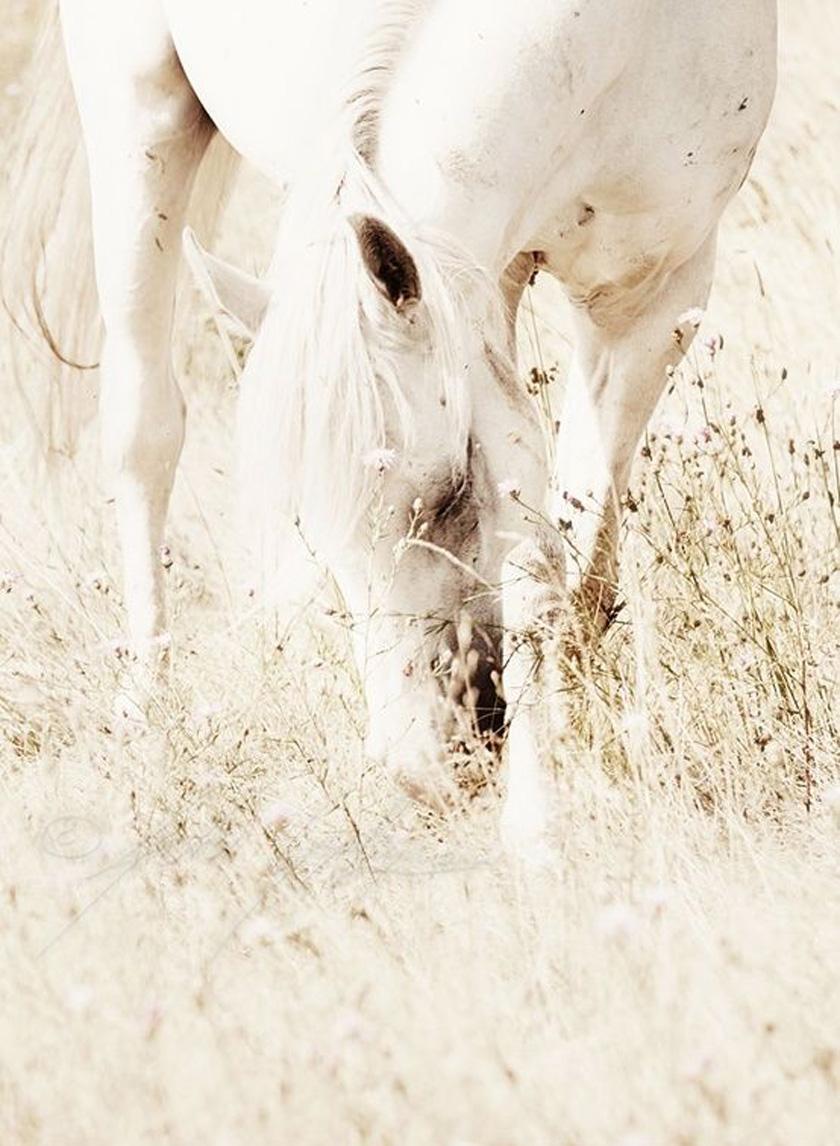 dreams_horse