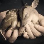 leahwedding_-bambi