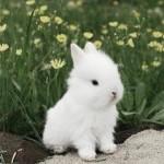 leahwedding_rabbit1
